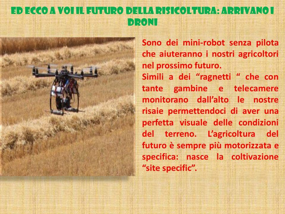 ED ECCO A VOI IL FUTURO DELLA RISICOLTURA: ARRIVANO I DRONI Sono dei mini-robot senza pilota che aiuteranno i nostri agricoltori nel prossimo futuro.