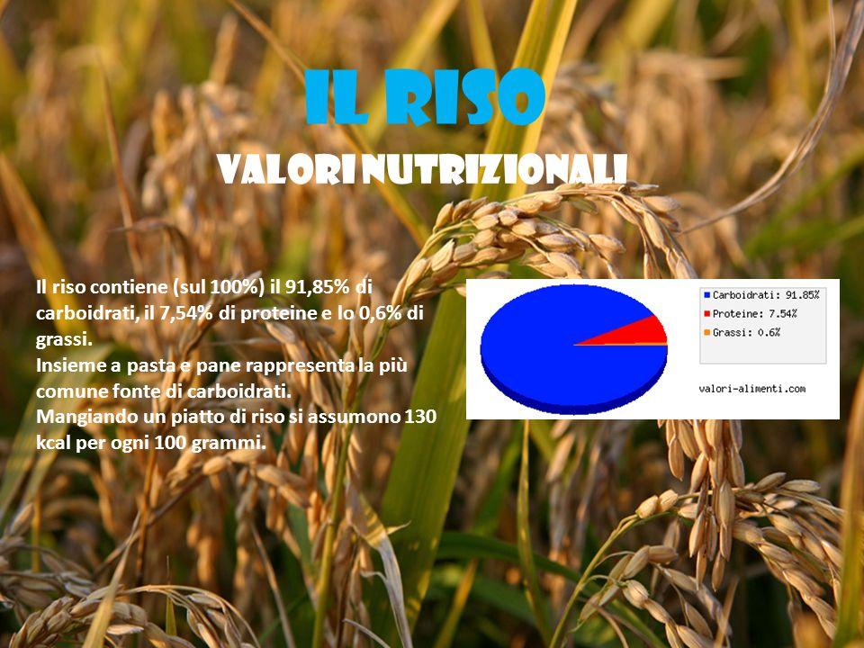 IL RISO VALORI NUTRIZIONALI Il riso contiene (sul 100%) il 91,85% di carboidrati, il 7,54% di proteine e lo 0,6% di grassi.