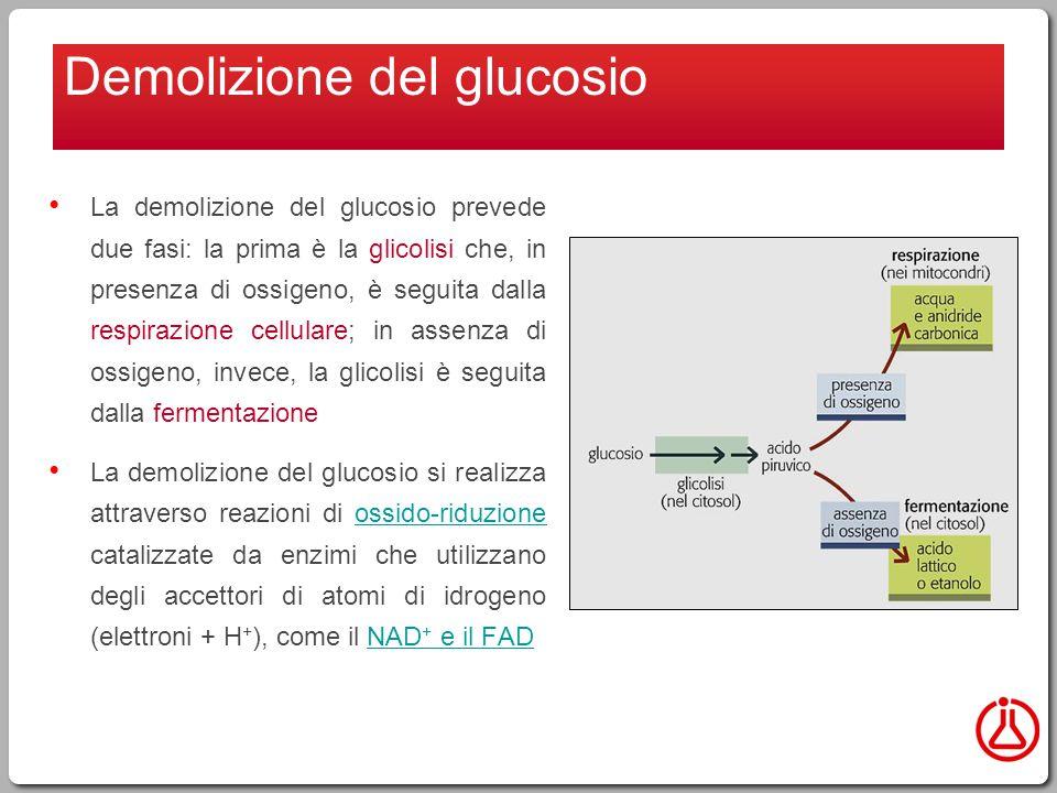 La demolizione del glucosio prevede due fasi: la prima è la glicolisi che, in presenza di ossigeno, è seguita dalla respirazione cellulare; in assenza di ossigeno, invece, la glicolisi è seguita dalla fermentazione La demolizione del glucosio si realizza attraverso reazioni di ossido-riduzione catalizzate da enzimi che utilizzano degli accettori di atomi di idrogeno (elettroni + H + ), come il NAD + e il FADossido-riduzioneNAD + e il FAD Demolizione del glucosio