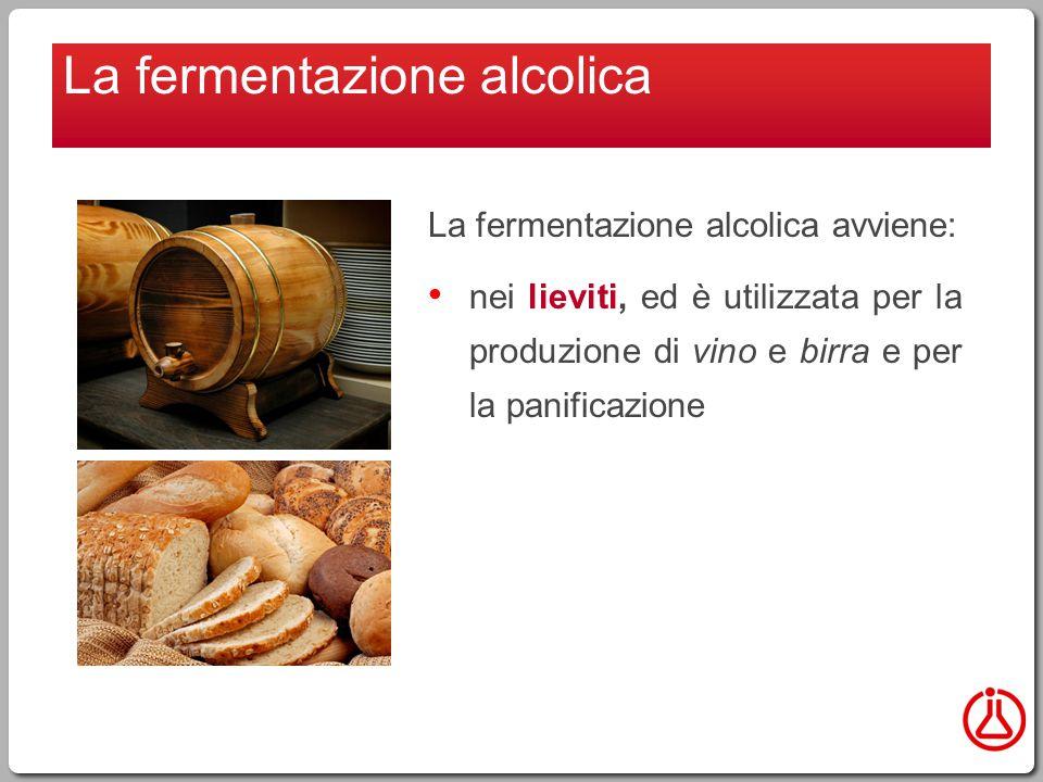 La fermentazione alcolica avviene: nei lieviti, ed è utilizzata per la produzione di vino e birra e per la panificazione La fermentazione alcolica