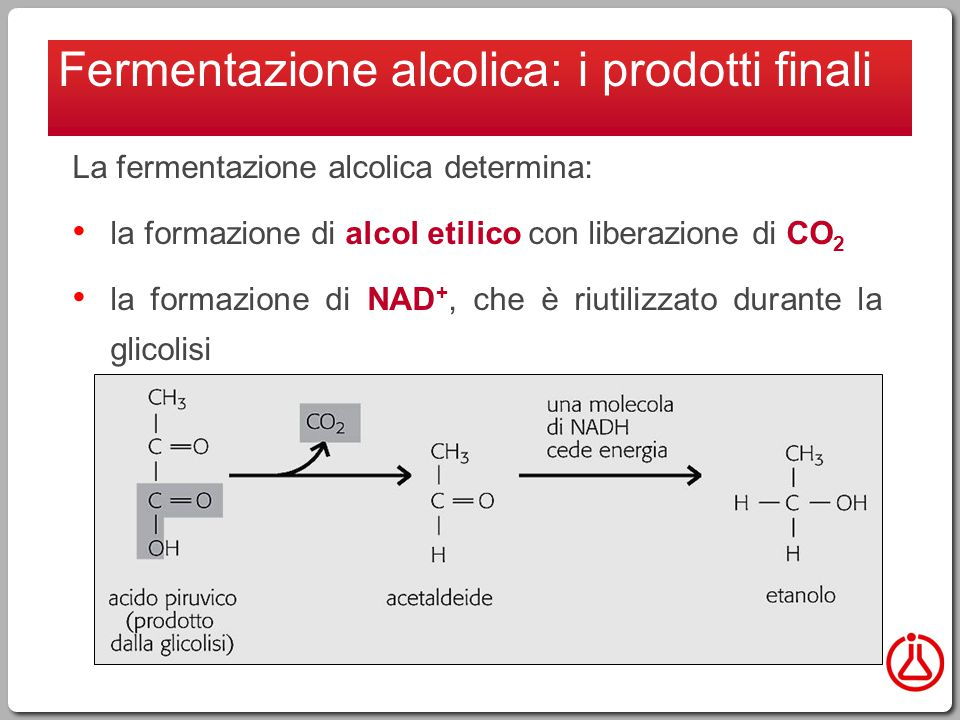 La fermentazione alcolica determina: la formazione di alcol etilico con liberazione di CO 2 la formazione di NAD +, che è riutilizzato durante la glicolisi Fermentazione alcolica: i prodotti finali