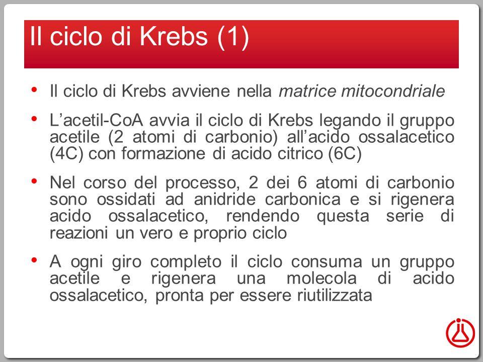 Il ciclo di Krebs avviene nella matrice mitocondriale L'acetil-CoA avvia il ciclo di Krebs legando il gruppo acetile (2 atomi di carbonio) all'acido ossalacetico (4C) con formazione di acido citrico (6C) Nel corso del processo, 2 dei 6 atomi di carbonio sono ossidati ad anidride carbonica e si rigenera acido ossalacetico, rendendo questa serie di reazioni un vero e proprio ciclo A ogni giro completo il ciclo consuma un gruppo acetile e rigenera una molecola di acido ossalacetico, pronta per essere riutilizzata Il ciclo di Krebs (1)