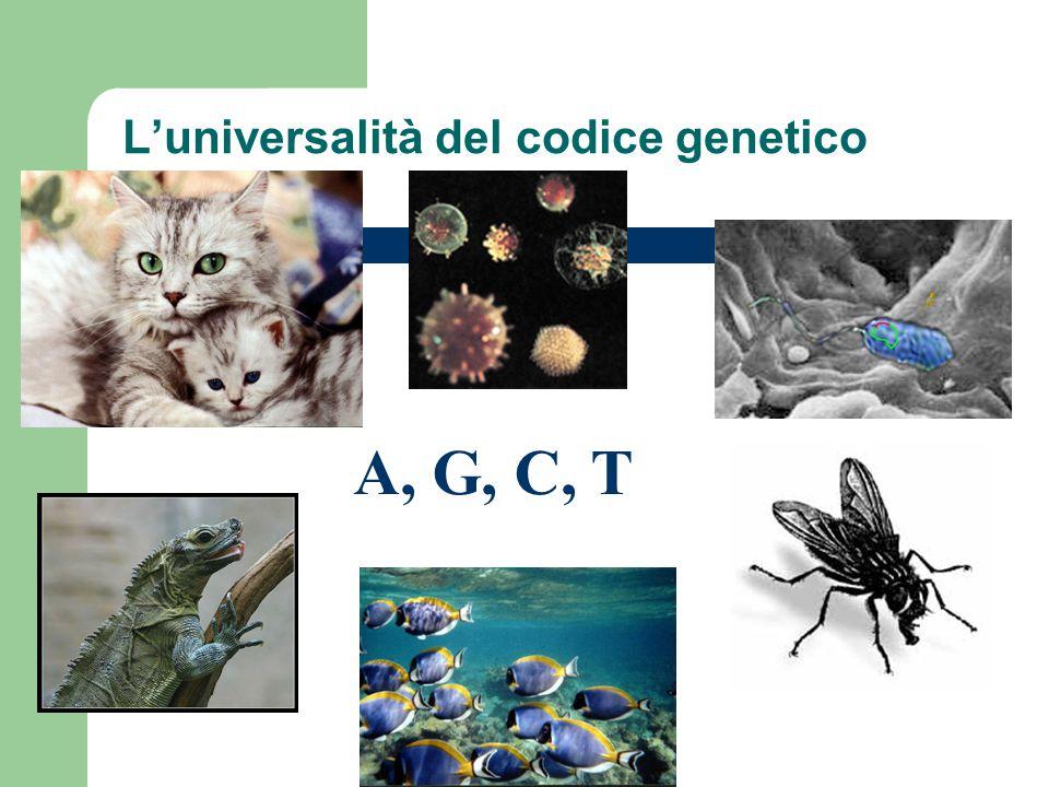 A, G, C, T L'universalità del codice genetico