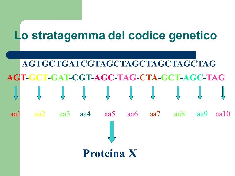 Lo stratagemma del codice genetico AGTGCTGATCGTAGCTAGCTAGCTAGCTAG AGT-GCT-GAT-CGT-AGC-TAG-CTA-GCT-AGC-TAG aa1 aa2 aa3 aa4 aa5 aa6 aa7 aa8 aa9 aa10 Pro