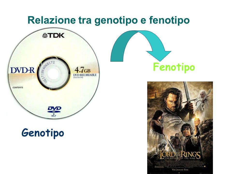 Genotipo Fenotipo Relazione tra genotipo e fenotipo
