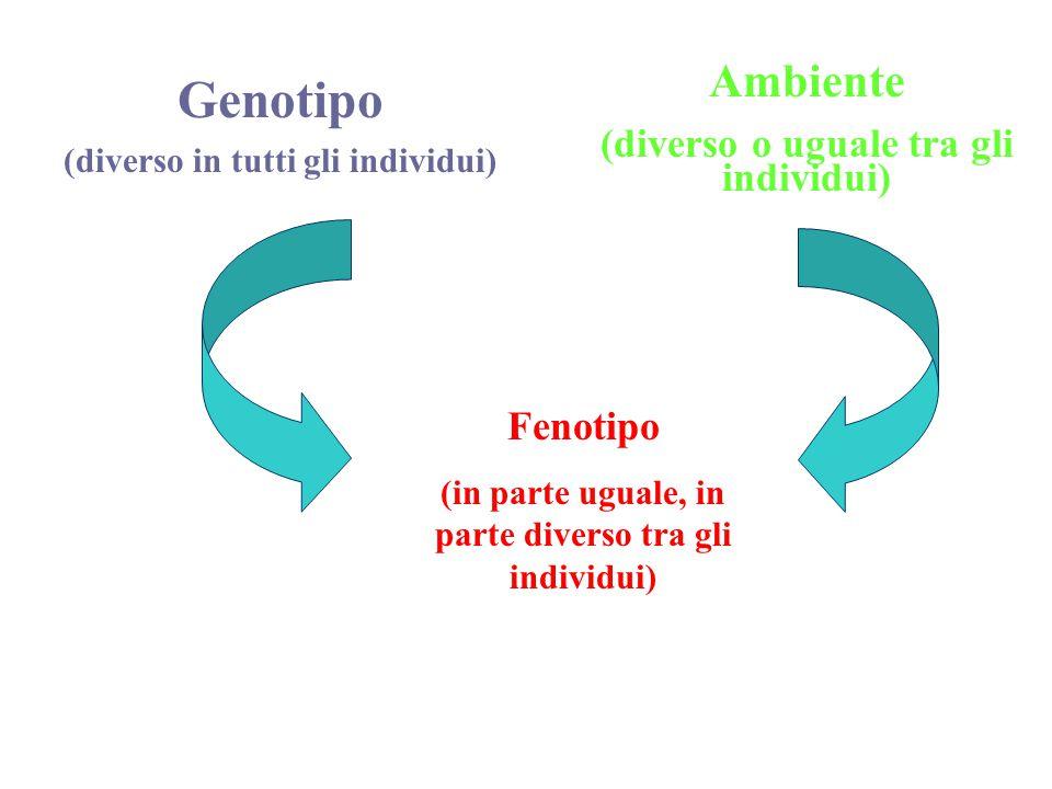 Genotipo (diverso in tutti gli individui) Ambiente (diverso o uguale tra gli individui) Fenotipo (in parte uguale, in parte diverso tra gli individui)