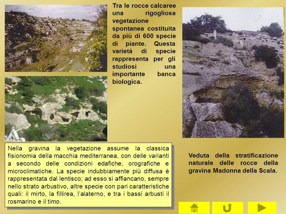 Tra le rocce calcaree una rigogliosa vegetazione spontanea costituita da più di 600 specie di piante. Questa varietà di specie rappresenta per gli stu