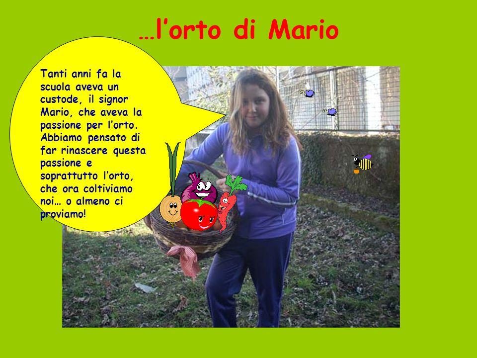 …l'orto di Mario Tanti anni fa la scuola aveva un custode, il signor Mario, che aveva la passione per l'orto. Abbiamo pensato di far rinascere questa