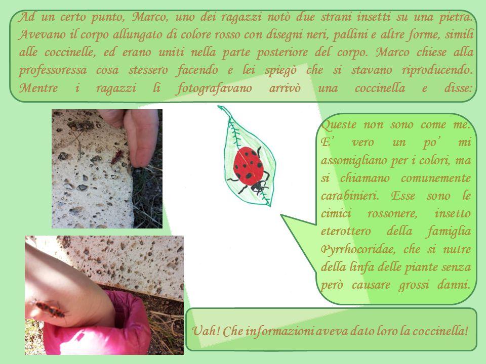 Ad un certo punto, Marco, uno dei ragazzi notò due strani insetti su una pietra. Avevano il corpo allungato di colore rosso con disegni neri, pallini