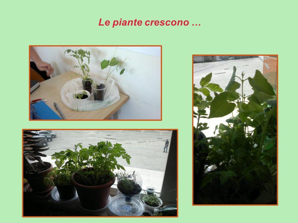 Le piante crescono …