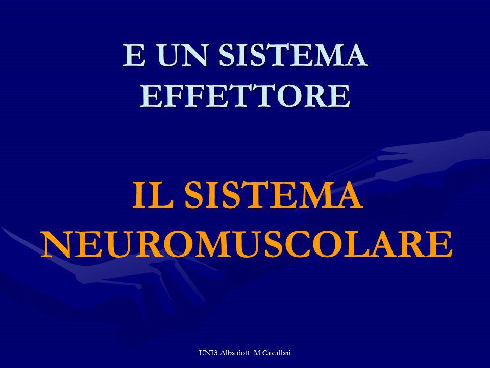 UNI3 Alba dott. M.Cavallari E UN SISTEMA EFFETTORE IL SISTEMA NEUROMUSCOLARE
