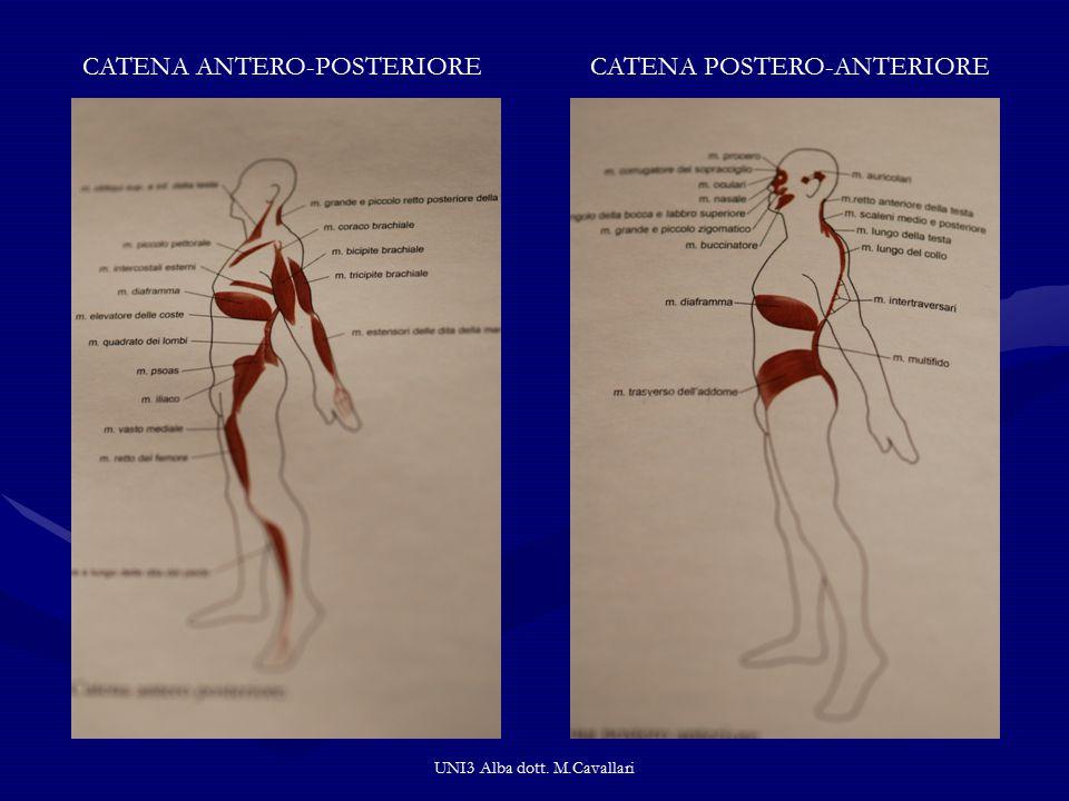 UNI3 Alba dott. M.Cavallari CATENA ANTERO-POSTERIORECATENA POSTERO-ANTERIORE
