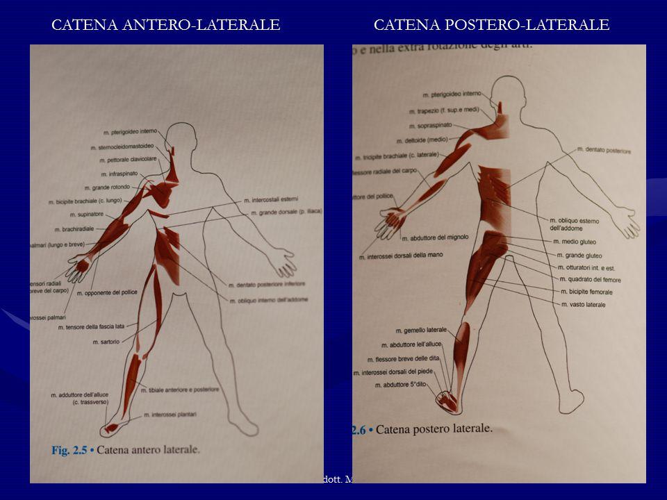 UNI3 Alba dott. M.Cavallari CATENA ANTERO-LATERALECATENA POSTERO-LATERALE