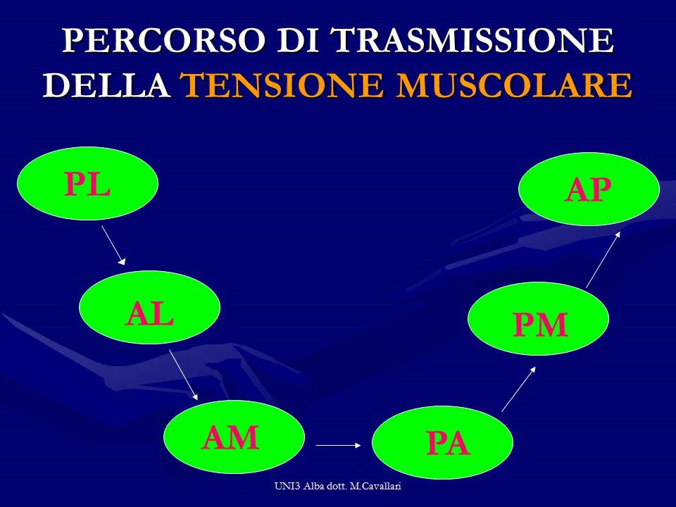 UNI3 Alba dott. M.Cavallari PERCORSO DI TRASMISSIONE DELLA TENSIONE MUSCOLARE PL AL AM PA PM AP