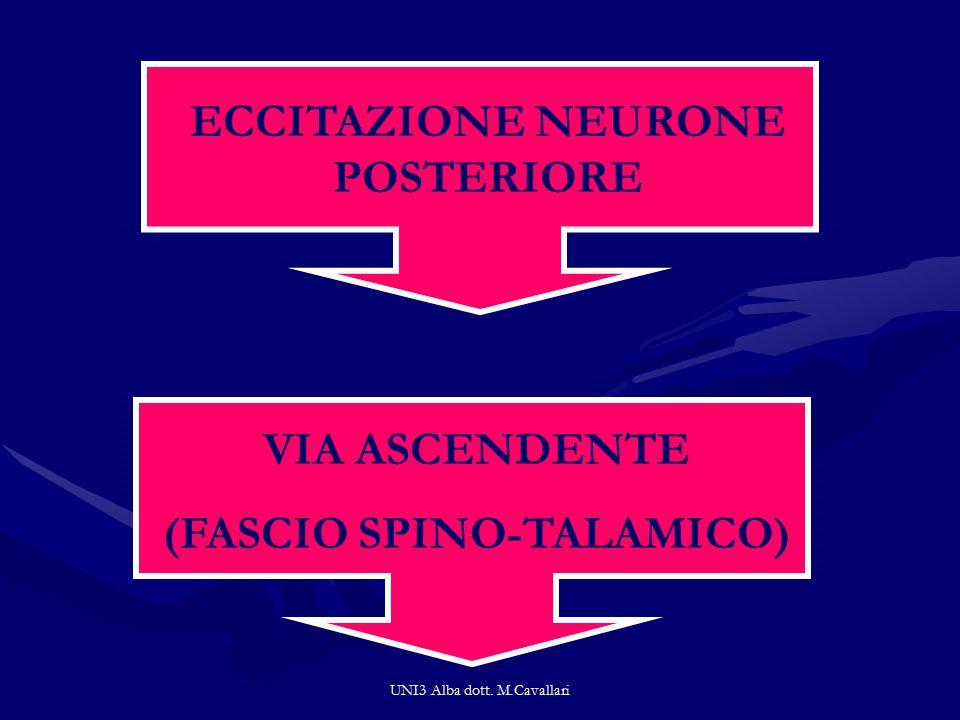 UNI3 Alba dott. M.Cavallari ECCITAZIONE NEURONE POSTERIORE VIA ASCENDENTE (FASCIO SPINO-TALAMICO)