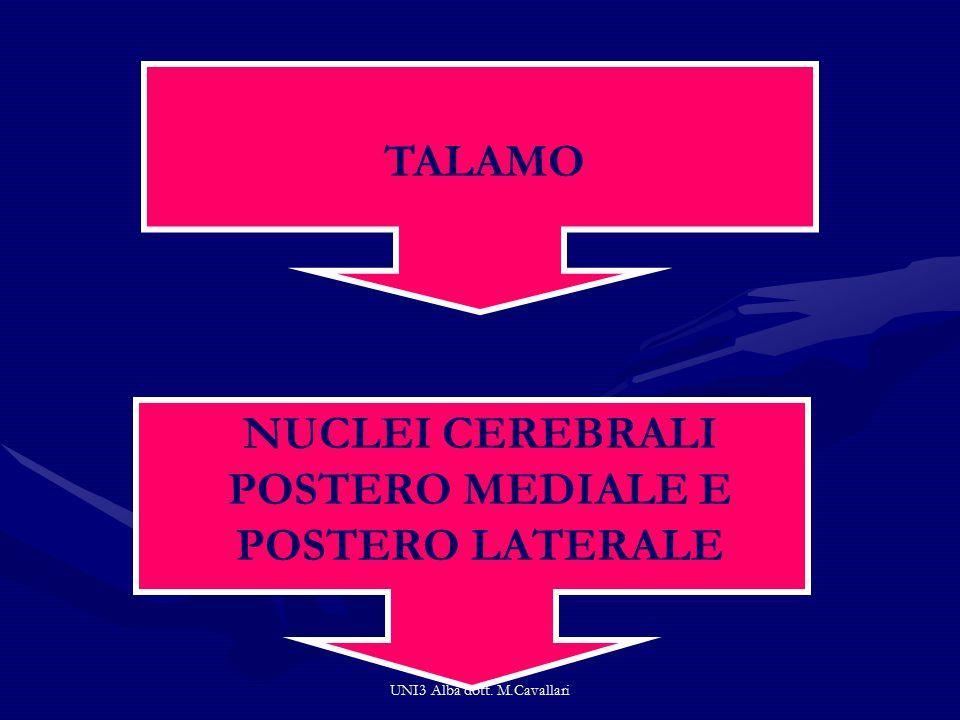 UNI3 Alba dott. M.Cavallari TALAMO NUCLEI CEREBRALI POSTERO MEDIALE E POSTERO LATERALE