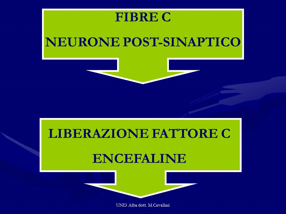UNI3 Alba dott. M.Cavallari FIBRE C NEURONE POST-SINAPTICO LIBERAZIONE FATTORE C ENCEFALINE