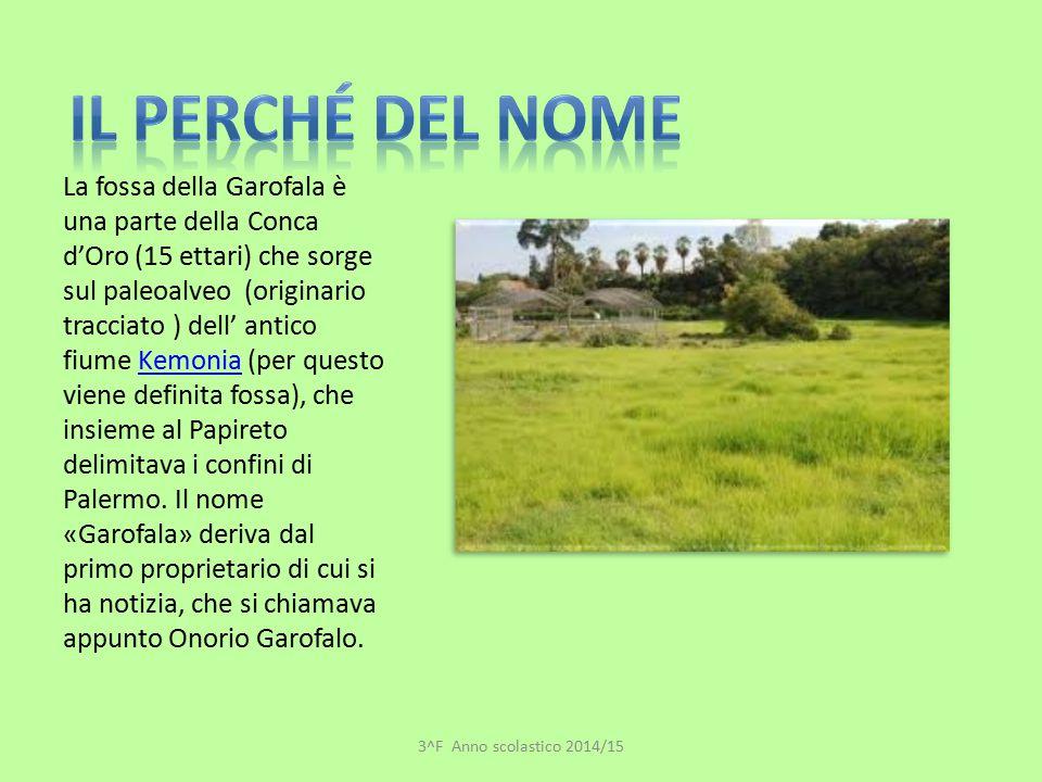 La fossa della Garofala è una parte della Conca d'Oro (15 ettari) che sorge sul paleoalveo (originario tracciato ) dell' antico fiume Kemonia (per que