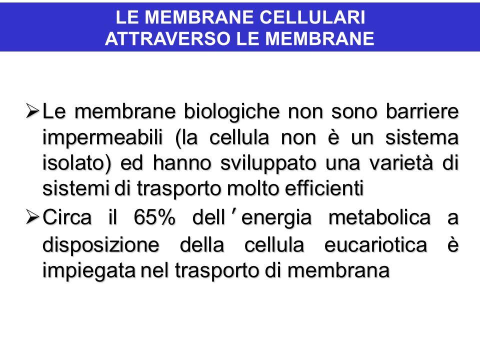  Le membrane biologiche non sono barriere impermeabili (la cellula non è un sistema isolato) ed hanno sviluppato una varietà di sistemi di trasporto molto efficienti  Circa il 65% dell'energia metabolica a disposizione della cellula eucariotica è impiegata nel trasporto di membrana IL PASSAGGIO DI IONI E MOLECOLE ATTRAVERSO LE MEMBRANE LE MEMBRANE CELLULARI