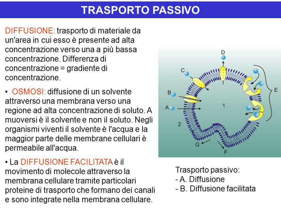 TRASPORTO PASSIVO DIFFUSIONE: trasporto di materiale da un area in cui esso è presente ad alta concentrazione verso una a più bassa concentrazione.