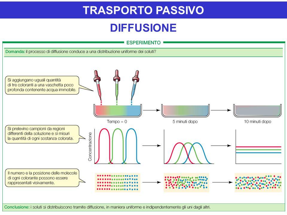 DIFFUSIONE TRASPORTO PASSIVO