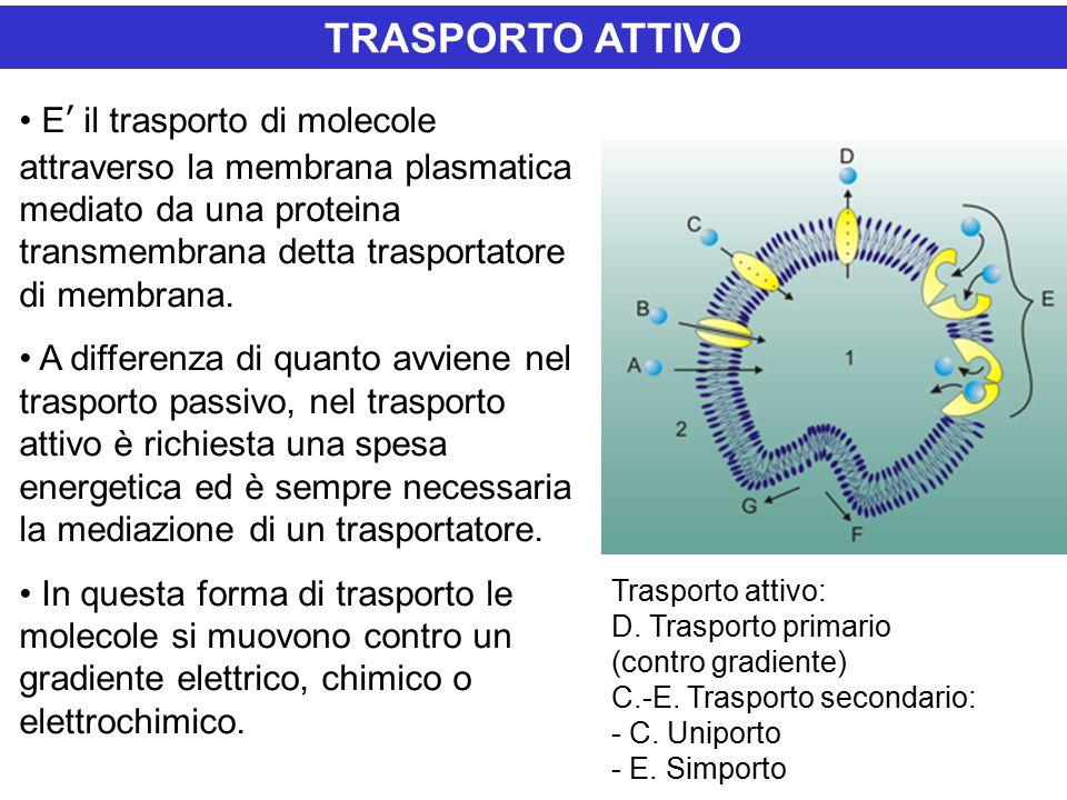 E' il trasporto di molecole attraverso la membrana plasmatica mediato da una proteina transmembrana detta trasportatore di membrana.