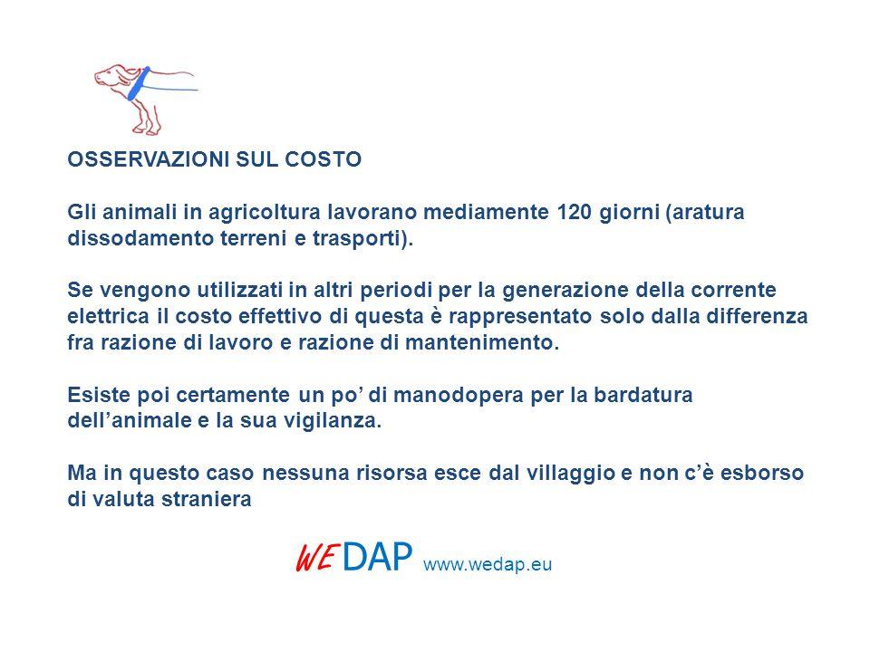 OSSERVAZIONI SUL COSTO Gli animali in agricoltura lavorano mediamente 120 giorni (aratura dissodamento terreni e trasporti).