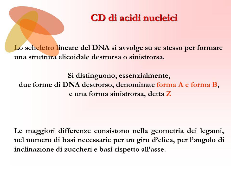 Lo scheletro lineare del DNA si avvolge su se stesso per formare una struttura elicoidale destrorsa o sinistrorsa.