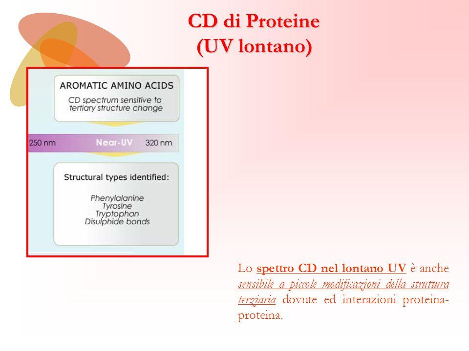 Lo spettro CD nel lontano UV è anche sensibile a piccole modificazioni della struttura terziaria dovute ed interazioni proteina- proteina. CD di Prote