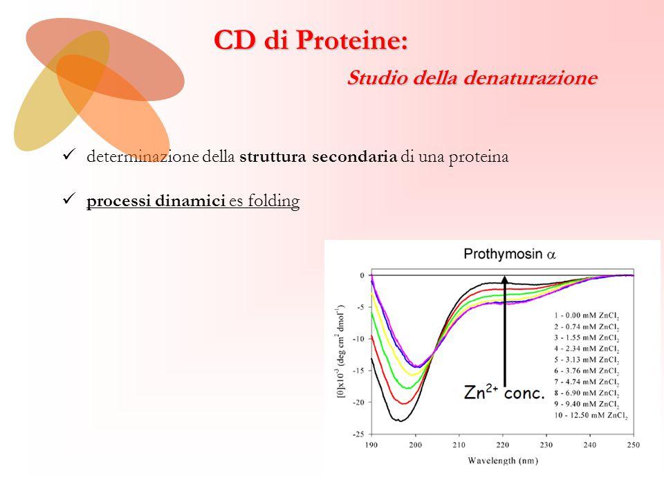 CD di Proteine: Studio della denaturazione Studio della denaturazione determinazione della struttura secondaria di una proteina processi dinamici es folding