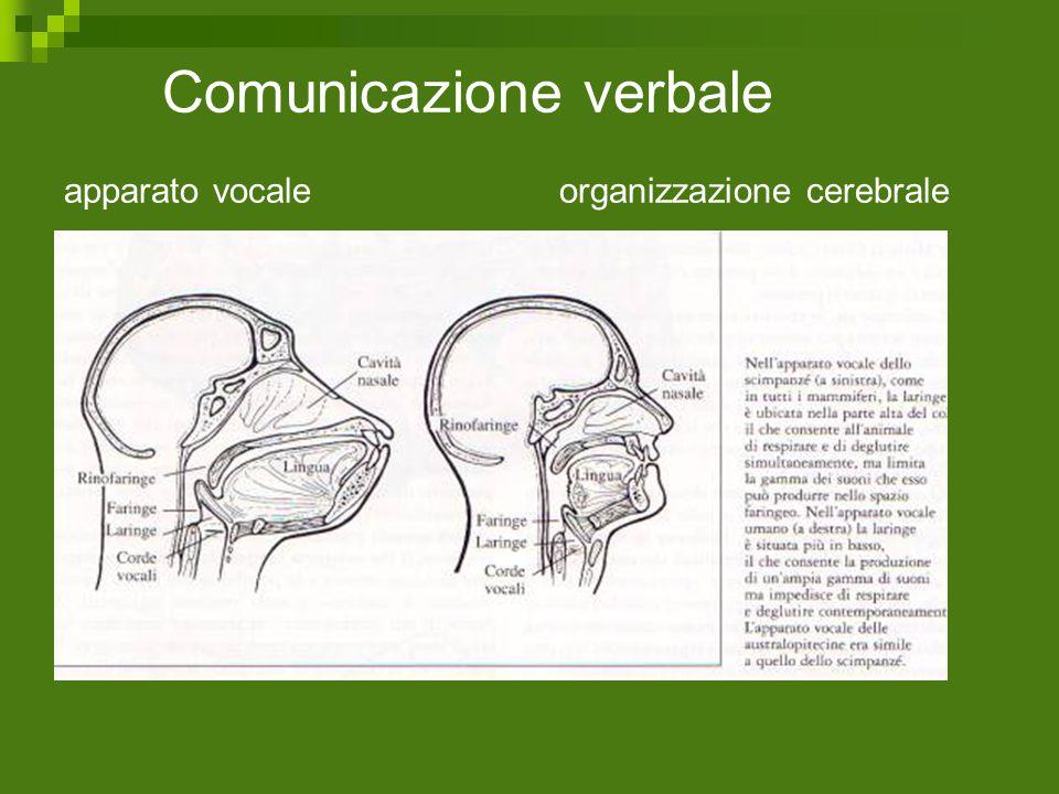 Comunicazione verbale apparato vocale organizzazione cerebrale