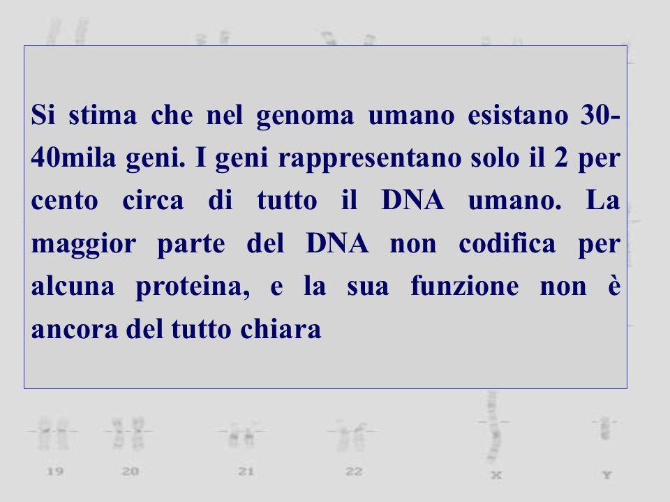 Si stima che nel genoma umano esistano 30- 40mila geni.