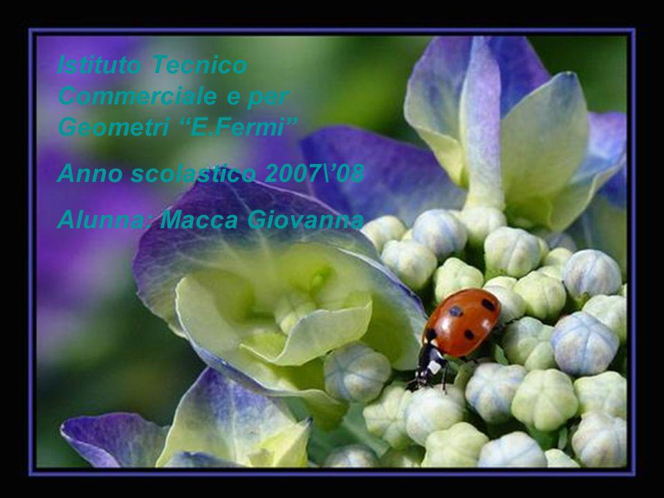 """Istituto Tecnico Commerciale e per Geometri """"E.Fermi"""" Anno scolastico 2007\'08 Alunna: Macca Giovanna"""
