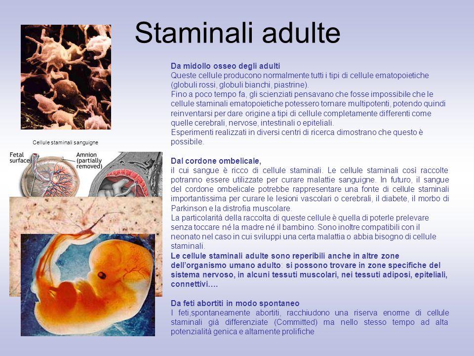 Cellule staminali sanguigne Da midollo osseo degli adulti Queste cellule producono normalmente tutti i tipi di cellule ematopoietiche (globuli rossi,