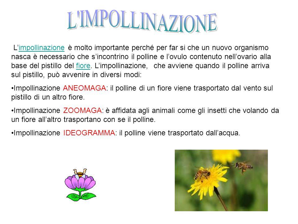L'impollinazione è molto importante perché per far si che un nuovo organismo nasca è necessario che s'incontrino il polline e l'ovulo contenuto nell'o