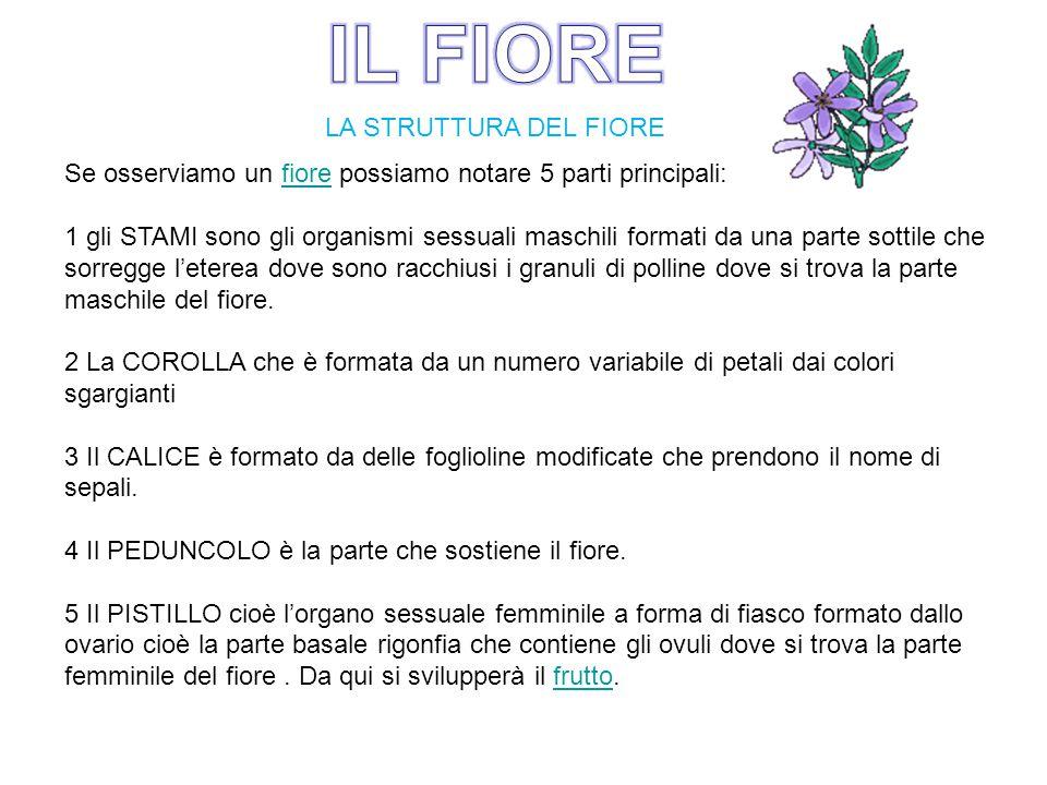 LA STRUTTURA DEL FIORE Se osserviamo un fiore possiamo notare 5 parti principali:fiore 1 gli STAMI sono gli organismi sessuali maschili formati da una