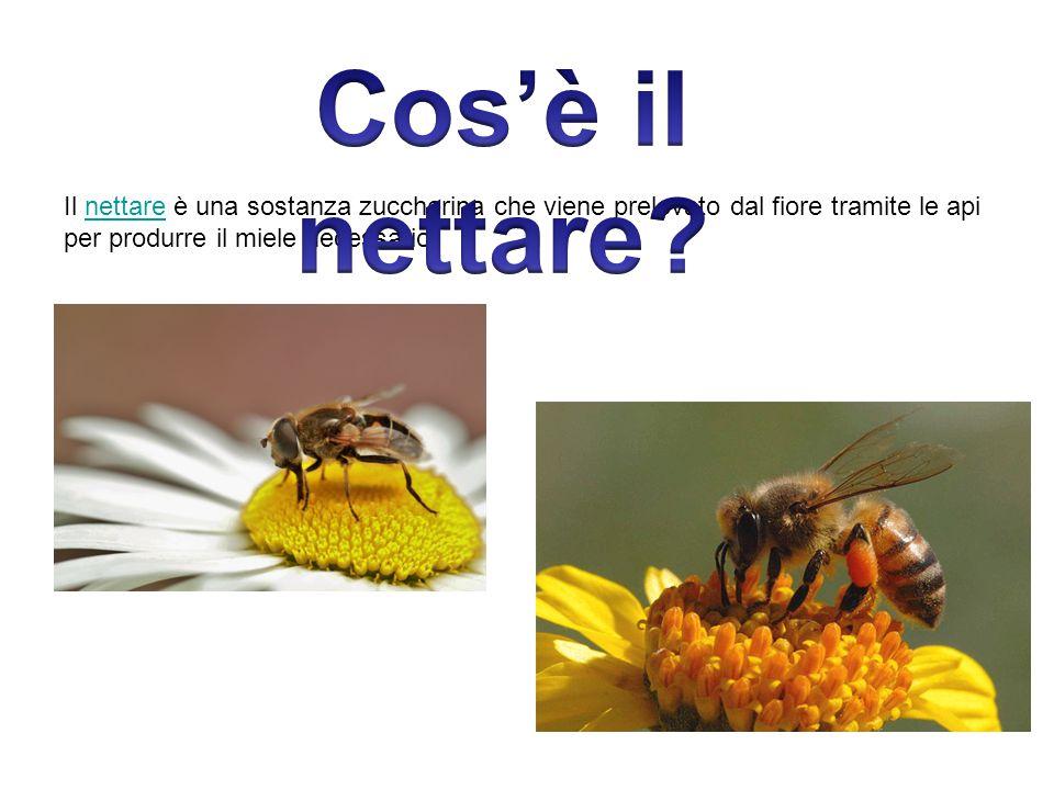 Il nettare è una sostanza zuccherina che viene prelevato dal fiore tramite le api per produrre il miele necessario.nettare