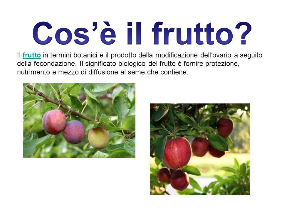 Il frutto in termini botanici è il prodotto della modificazione dell'ovario a seguito della fecondazione. Il significato biologico del frutto è fornir