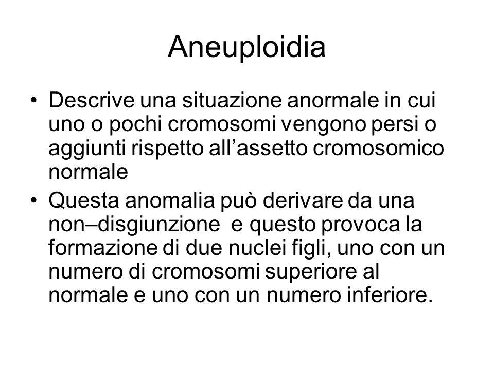 Aneuploidia Descrive una situazione anormale in cui uno o pochi cromosomi vengono persi o aggiunti rispetto all'assetto cromosomico normale Questa anomalia può derivare da una non–disgiunzione e questo provoca la formazione di due nuclei figli, uno con un numero di cromosomi superiore al normale e uno con un numero inferiore.