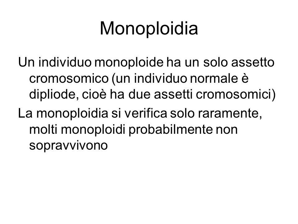 Monoploidia Un individuo monoploide ha un solo assetto cromosomico (un individuo normale è dipliode, cioè ha due assetti cromosomici) La monoploidia si verifica solo raramente, molti monoploidi probabilmente non sopravvivono