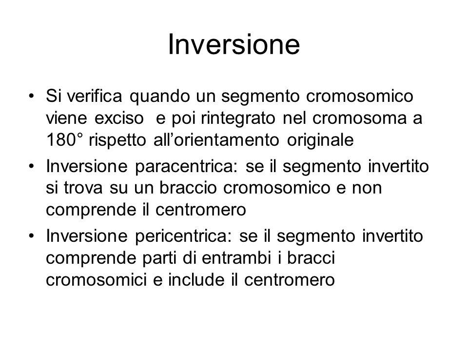 Inversione Si verifica quando un segmento cromosomico viene exciso e poi rintegrato nel cromosoma a 180° rispetto all'orientamento originale Inversione paracentrica: se il segmento invertito si trova su un braccio cromosomico e non comprende il centromero Inversione pericentrica: se il segmento invertito comprende parti di entrambi i bracci cromosomici e include il centromero