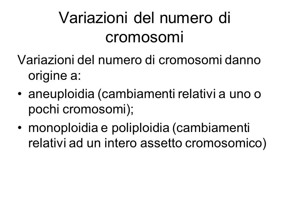 Variazioni del numero di cromosomi Variazioni del numero di cromosomi danno origine a: aneuploidia (cambiamenti relativi a uno o pochi cromosomi); monoploidia e poliploidia (cambiamenti relativi ad un intero assetto cromosomico)