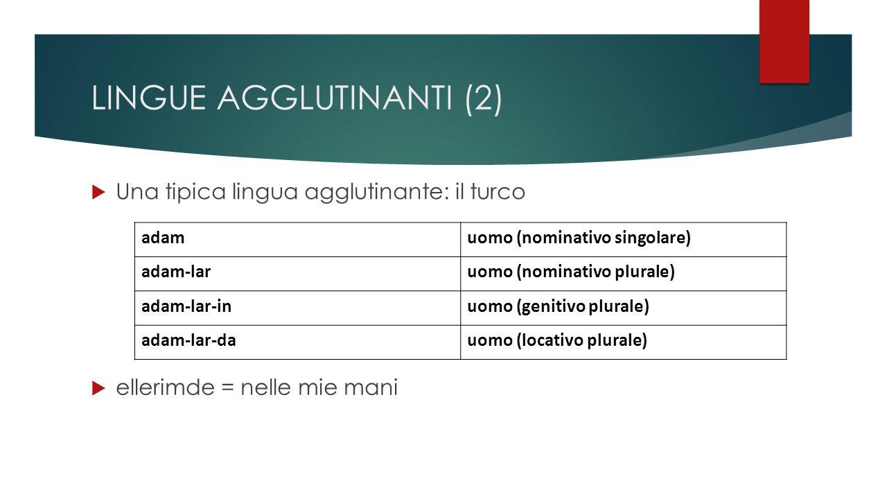 LINGUE AGGLUTINANTI (2)  Una tipica lingua agglutinante: il turco adamuomo (nominativo singolare) adam-laruomo (nominativo plurale) adam-lar-inuomo (genitivo plurale) adam-lar-dauomo (locativo plurale)  ellerimde = nelle mie mani