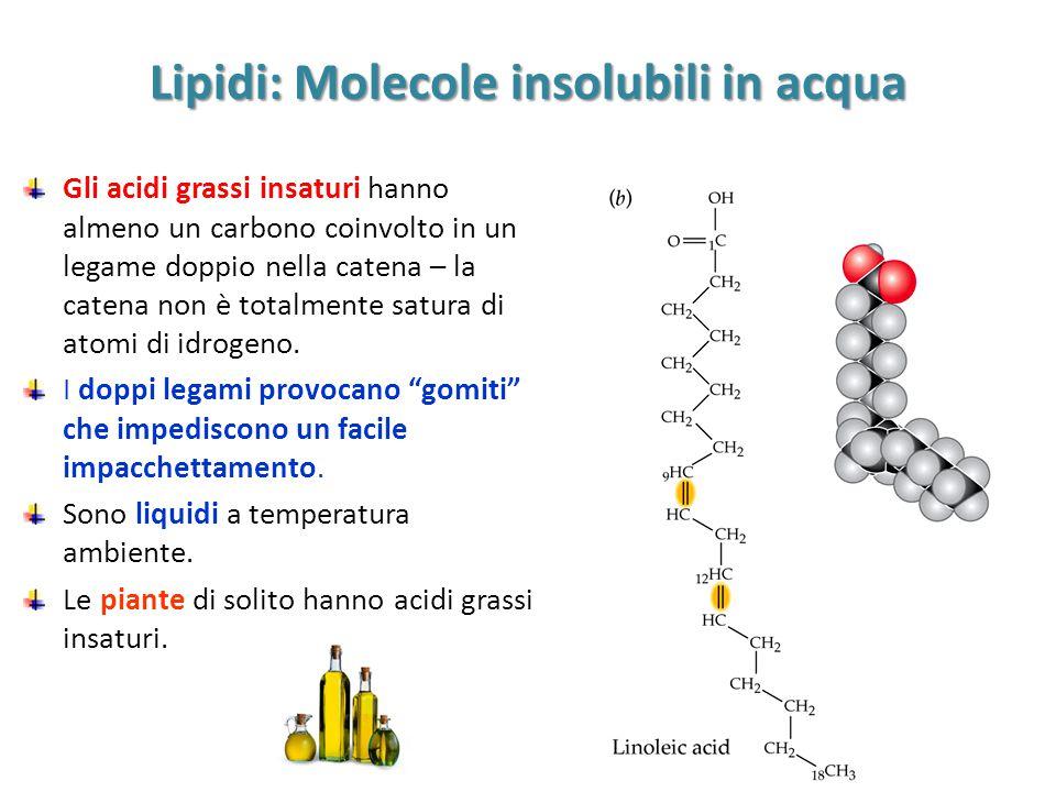 Lipidi: Molecole insolubili in acqua Gli acidi grassi insaturi hanno almeno un carbono coinvolto in un legame doppio nella catena – la catena non è to