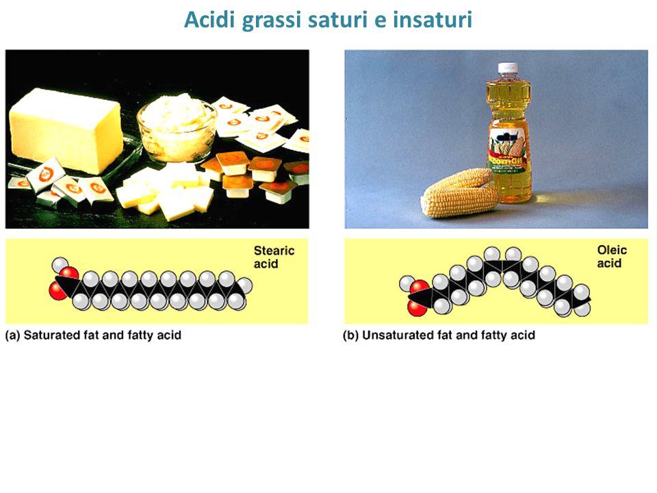 Acidi grassi saturi e insaturi Most animal fats, solid Most vegetable oils, one @ RT one or more double bonds liquid @ RT