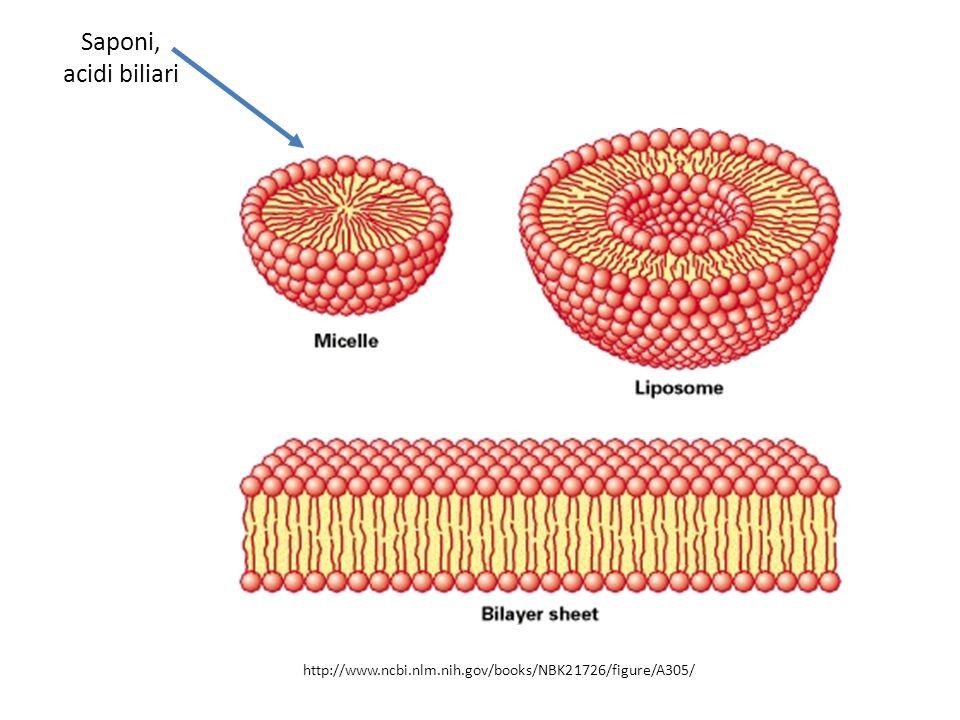 Saponi, acidi biliari http://www.ncbi.nlm.nih.gov/books/NBK21726/figure/A305/