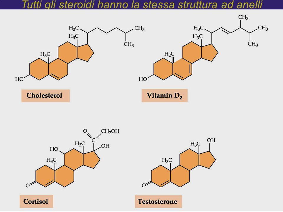 Tutti gli steroidi hanno la stessa struttura ad anelli