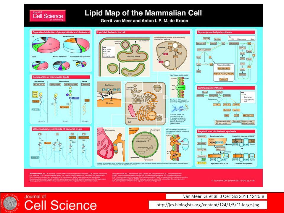 van Meer, G. et al. J Cell Sci 2011;124:5-8 http://jcs.biologists.org/content/124/1/5/F1.large.jpg