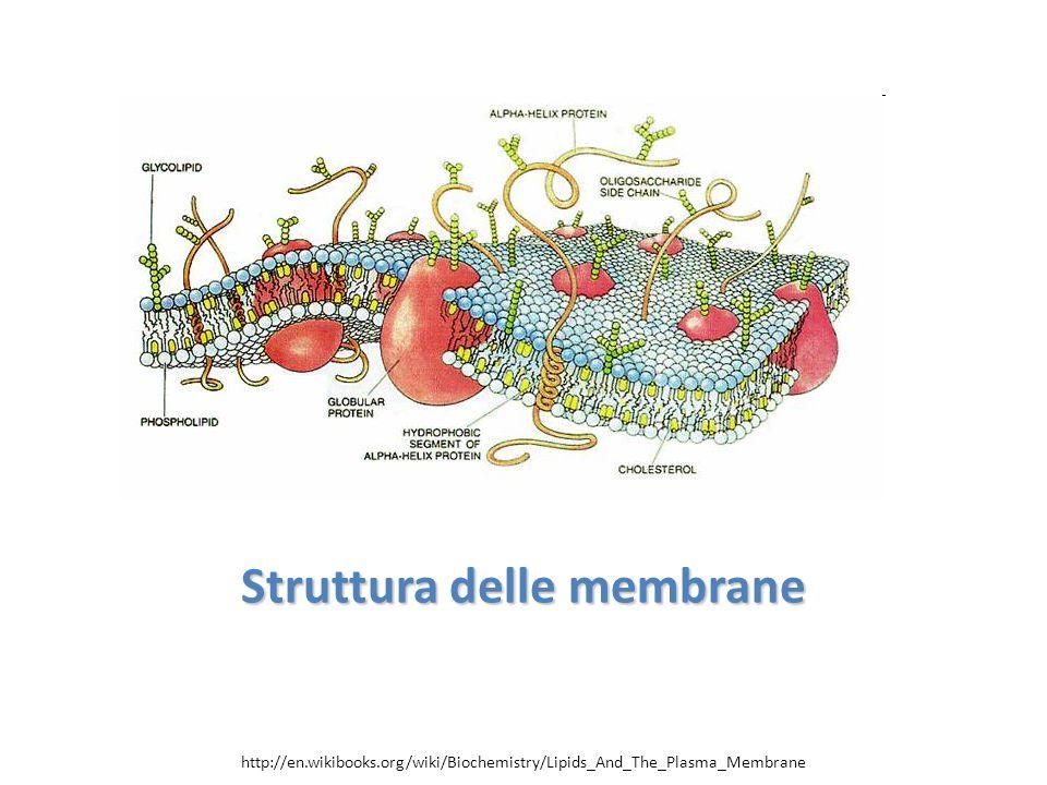Struttura delle membrane http://en.wikibooks.org/wiki/Biochemistry/Lipids_And_The_Plasma_Membrane