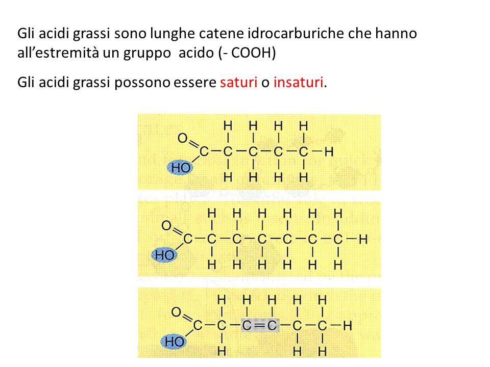 Gli acidi grassi sono lunghe catene idrocarburiche che hanno all'estremità un gruppo acido (- COOH) Gli acidi grassi possono essere saturi o insaturi.
